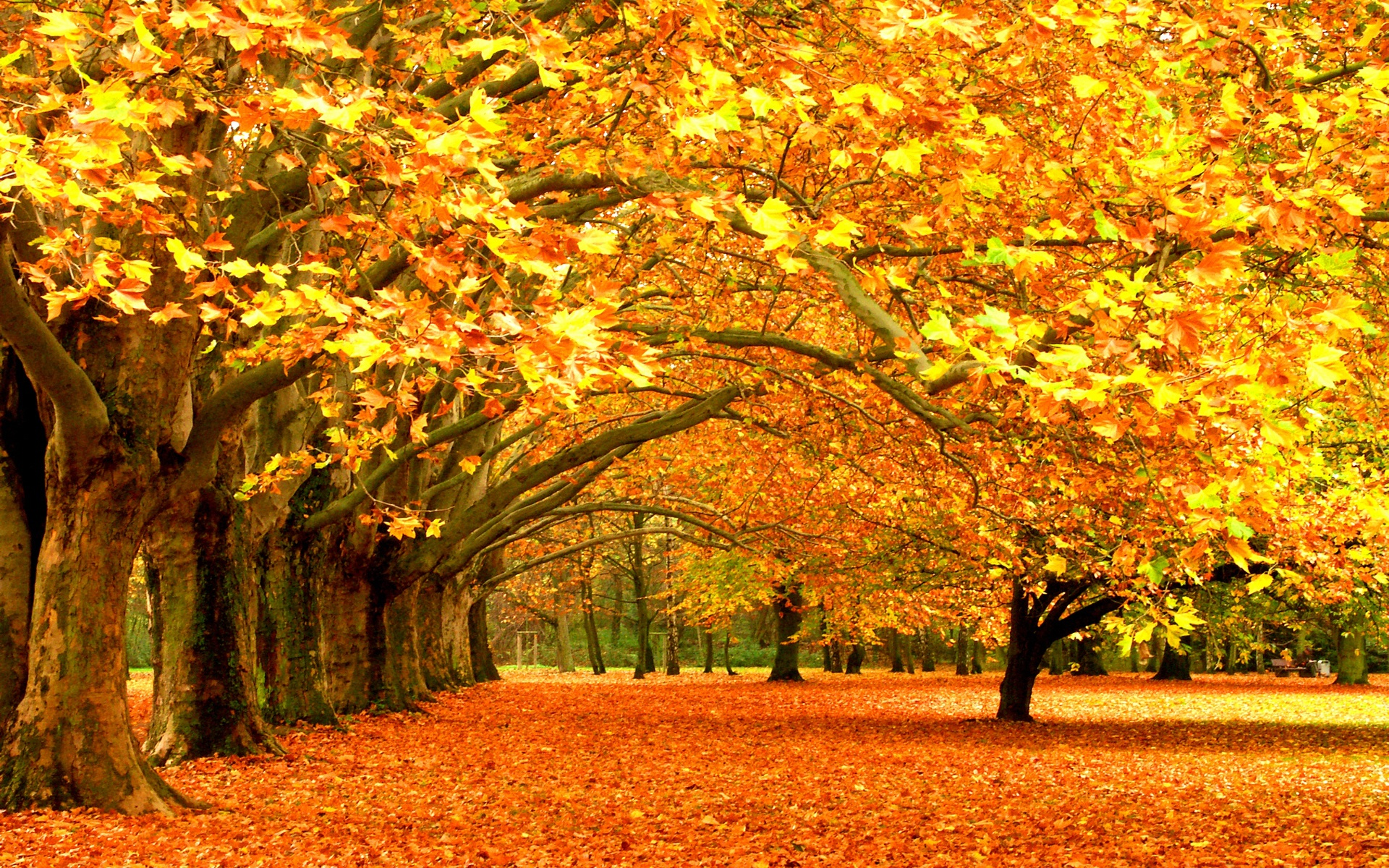 fall wallpapers awsome Autumn