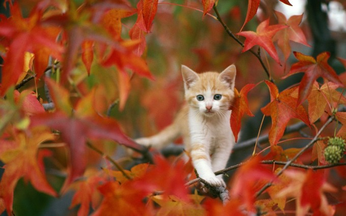 fall wallpapers cat Autumn