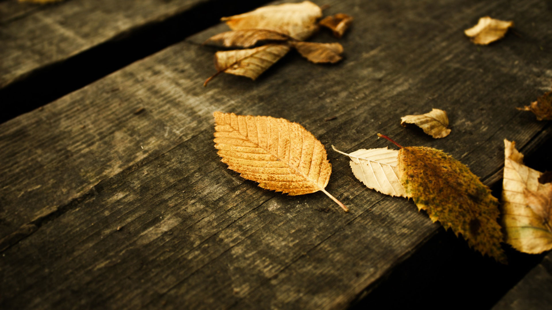 fall wallpapers dark Autumn