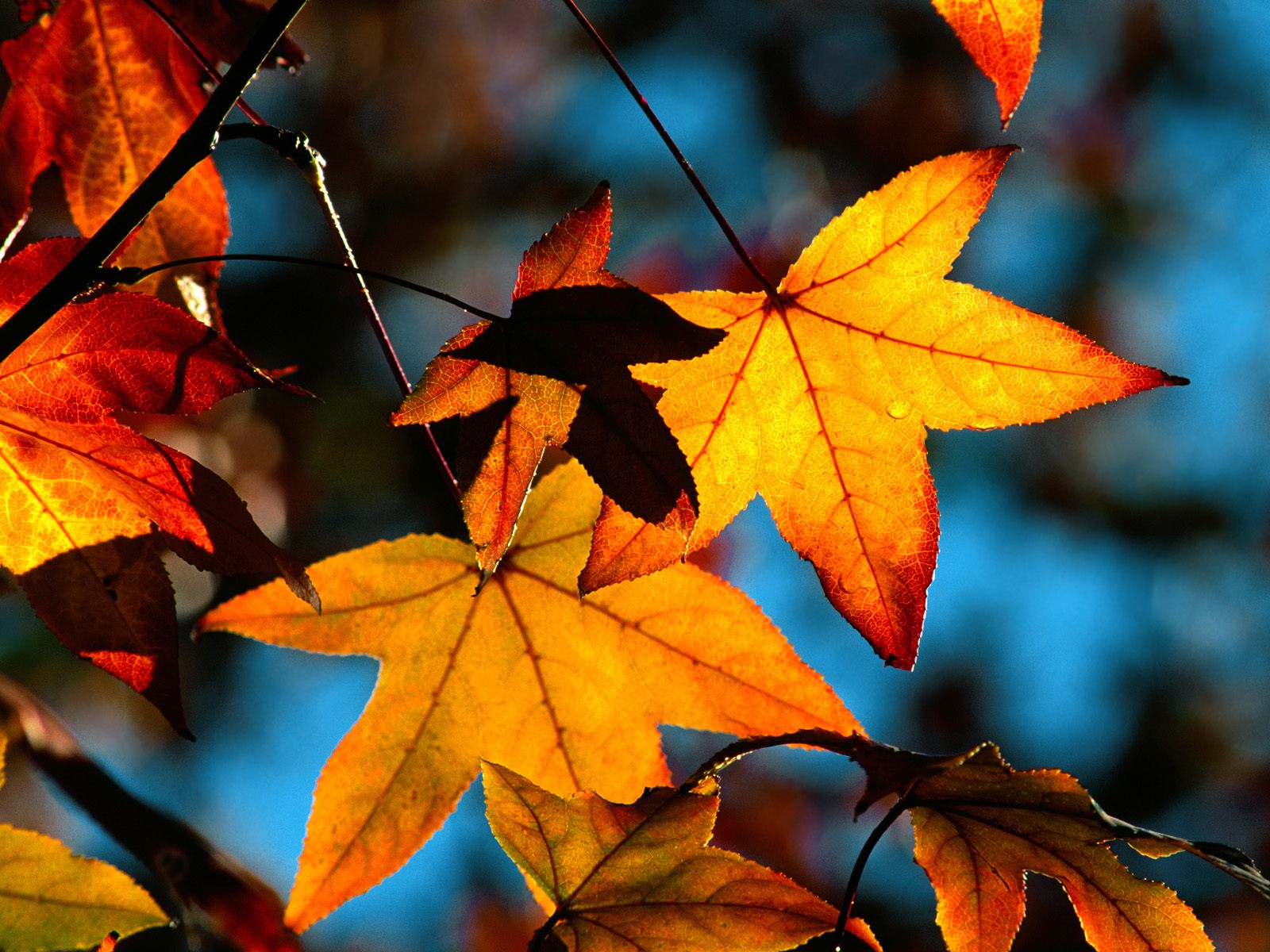 fall wallpapers leaf Autumn