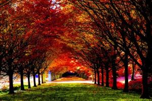 fall wallpapers nice Autumn