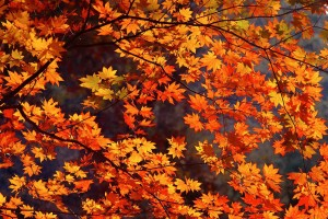fall wallpapers orange leaves Autumn