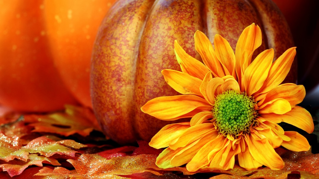 fall wallpapers pumpkin hd desktop wallpapers 4k hd