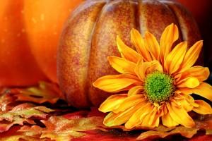 fall wallpapers pumpkin Autumn