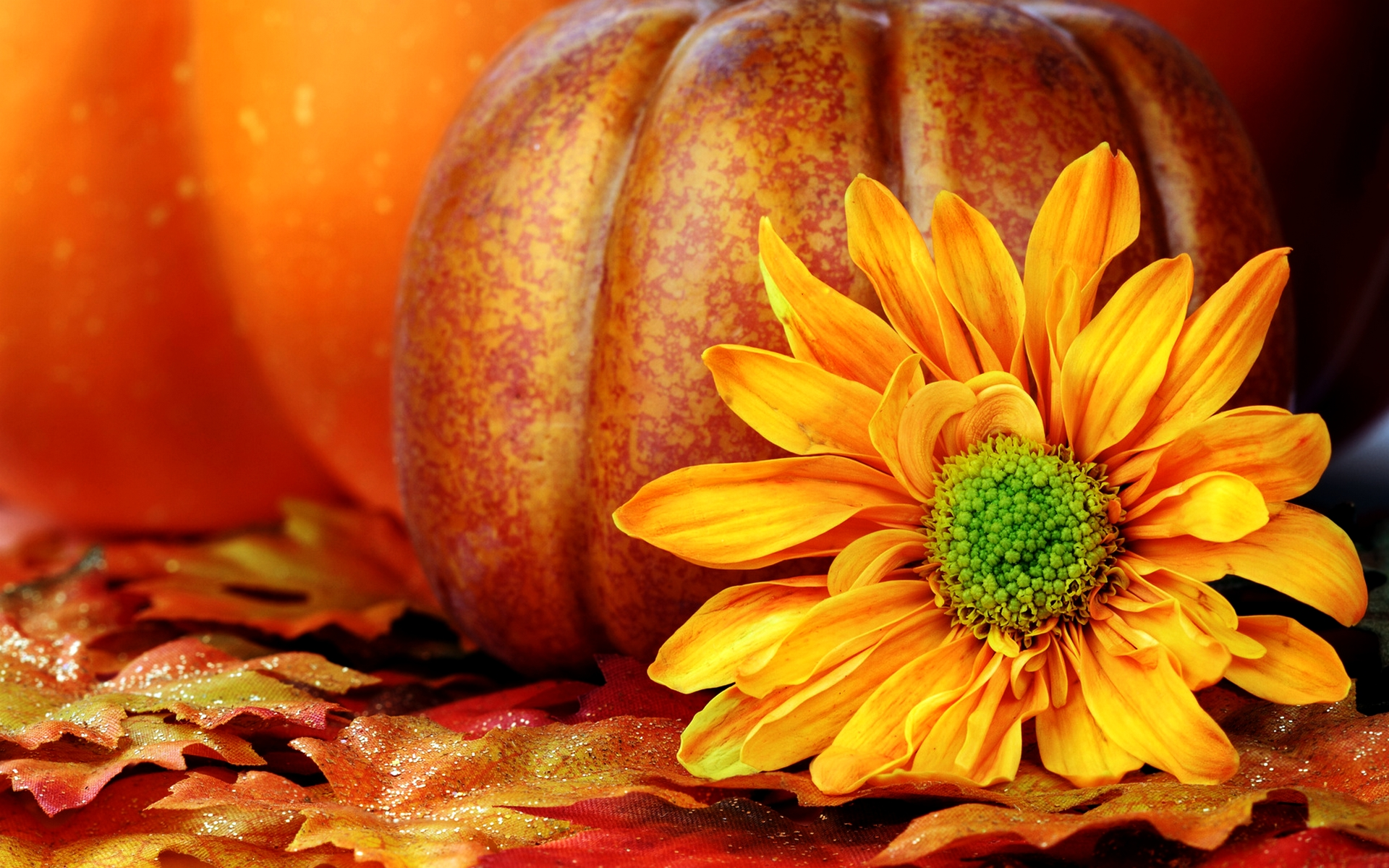 Fall Wallpapers Pumpkin
