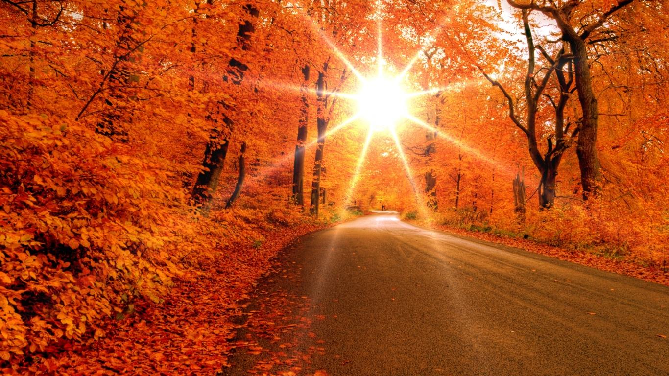 fall wallpapers sunlight Autumn