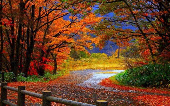 free fall wallpaper Autumn