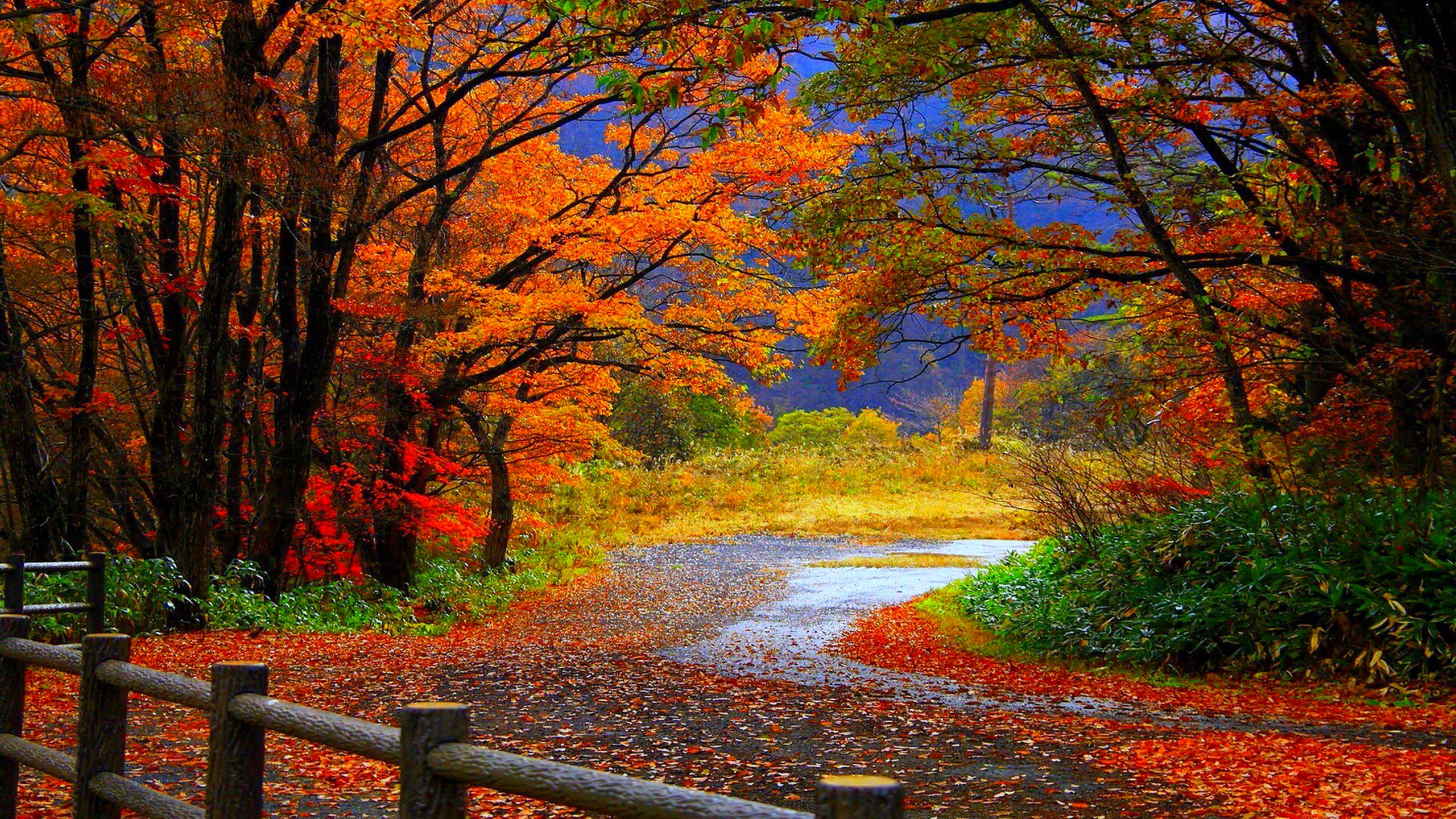 free fall wallpaper Autumn