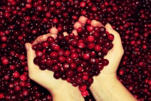 heart wallpapers cherry