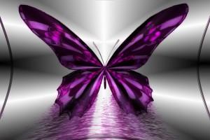 images butterflies
