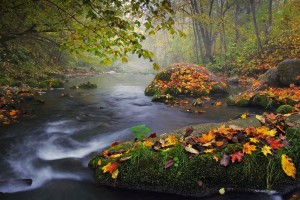 landscape wallpaper autumn