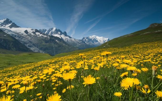 landscape wallpaper flowers