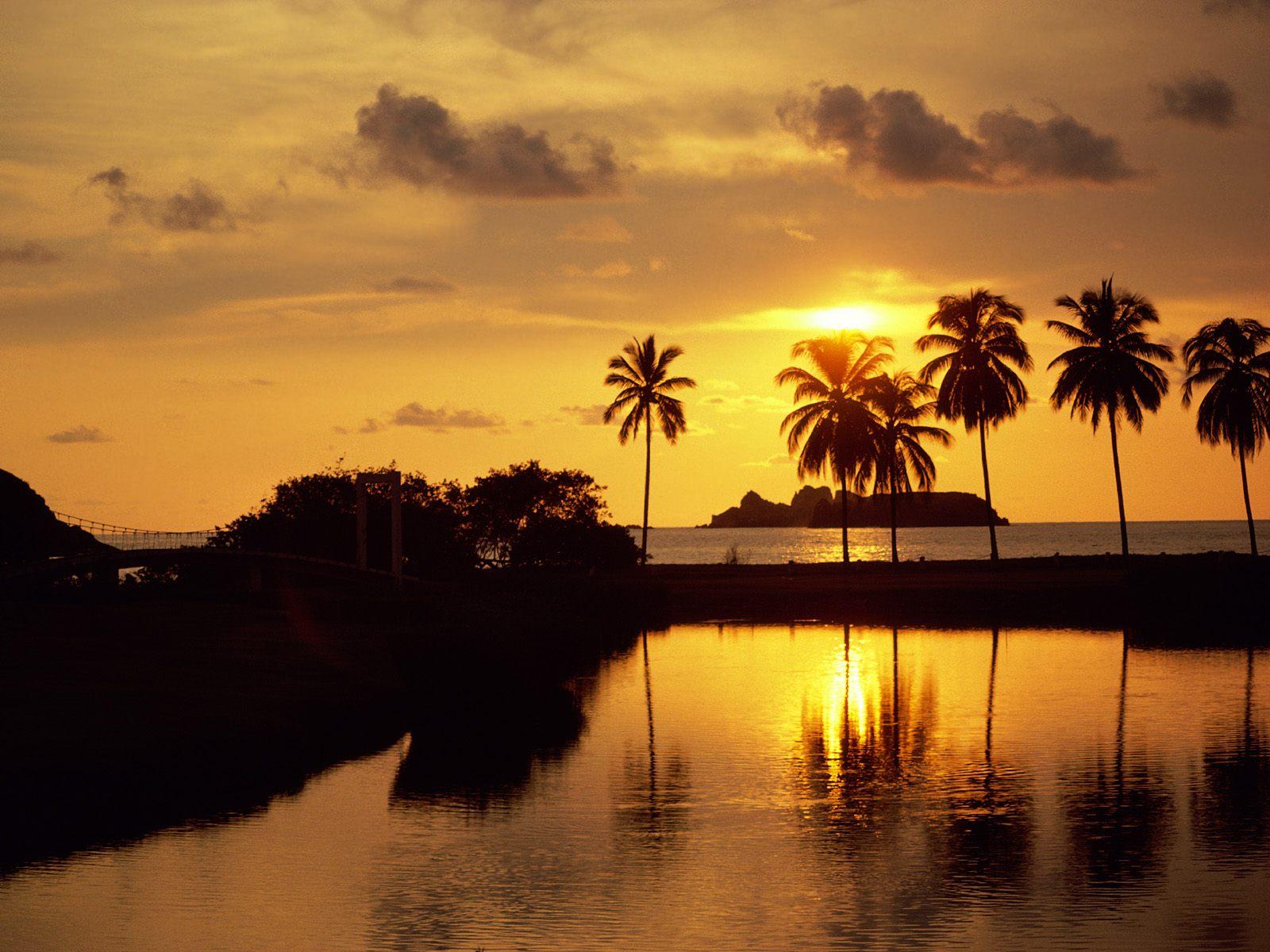 landscape wallpaper palm trees
