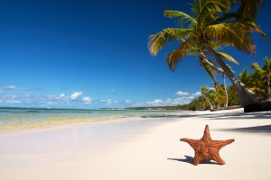 star fish Beach Wallpapers