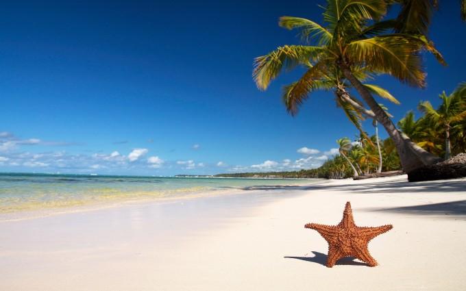 star fish Beach Wallpapers