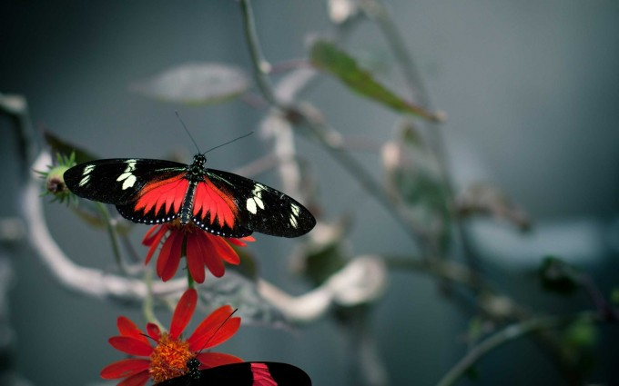 wallpaper butterfly free download
