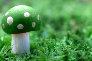 abstract wallpapers hd green mushroom