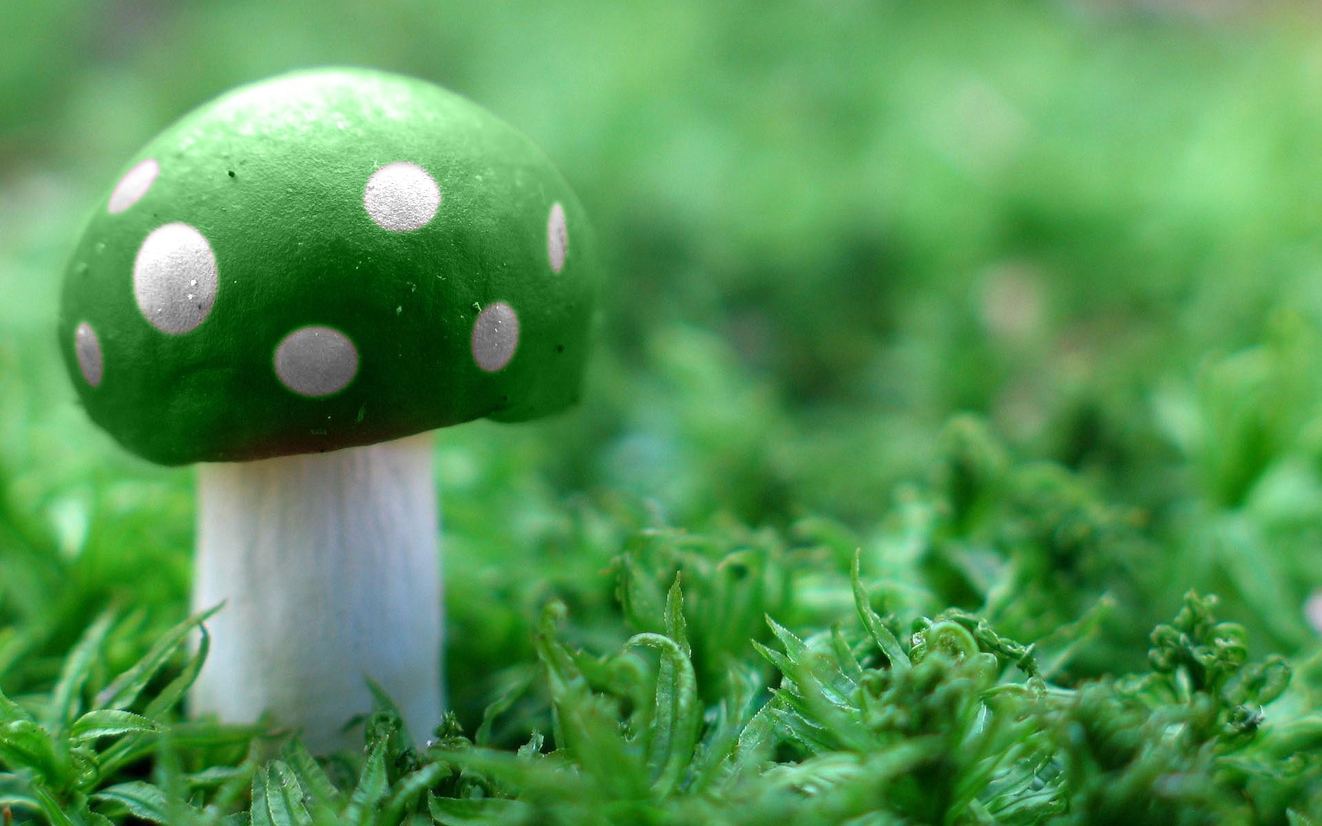 abstract wallpapers hd green mushroom