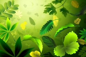 abstract wallpapers hd leaves