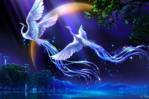 bird wallpaper 3d