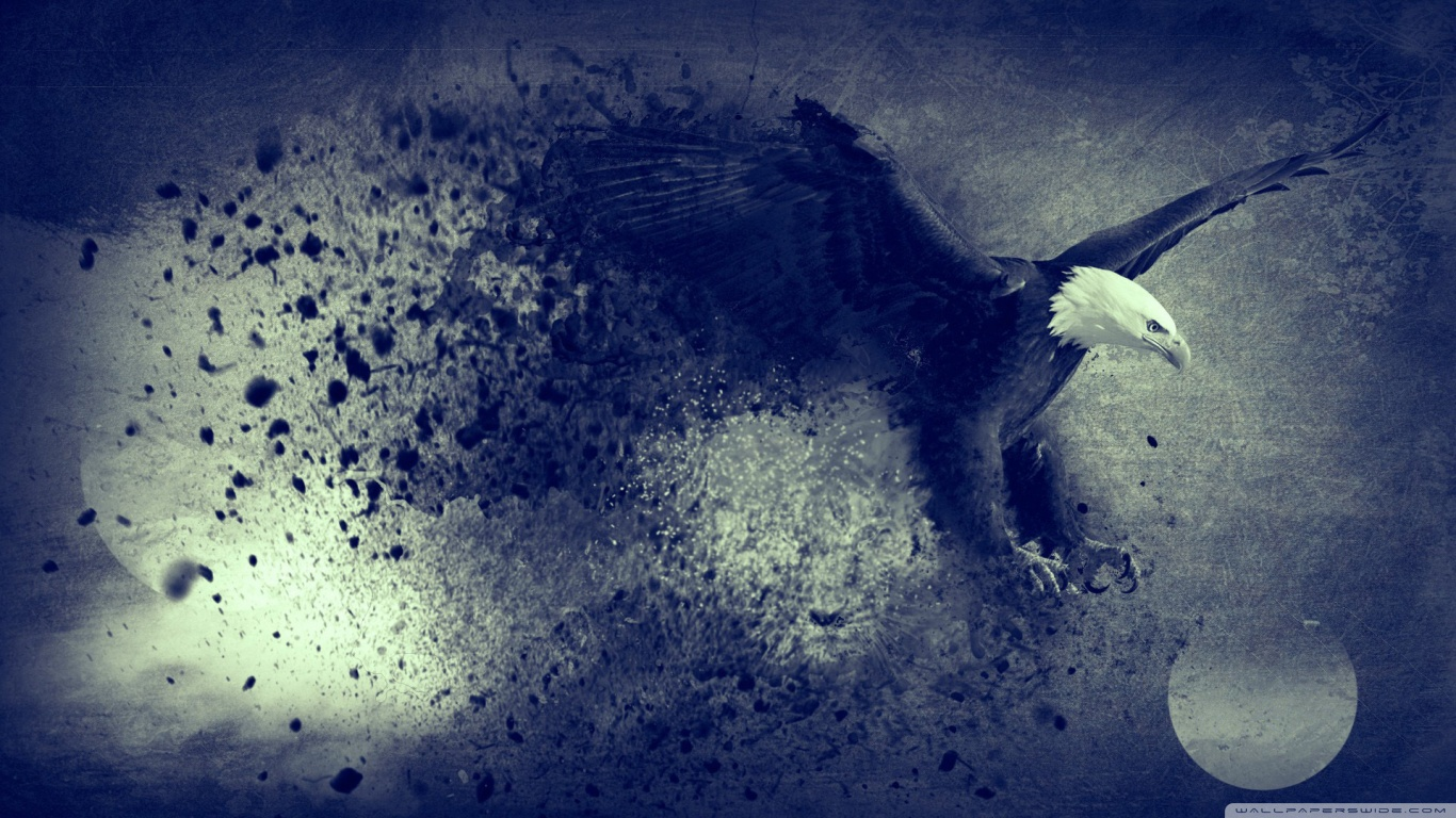 bird wallpaper black eagle