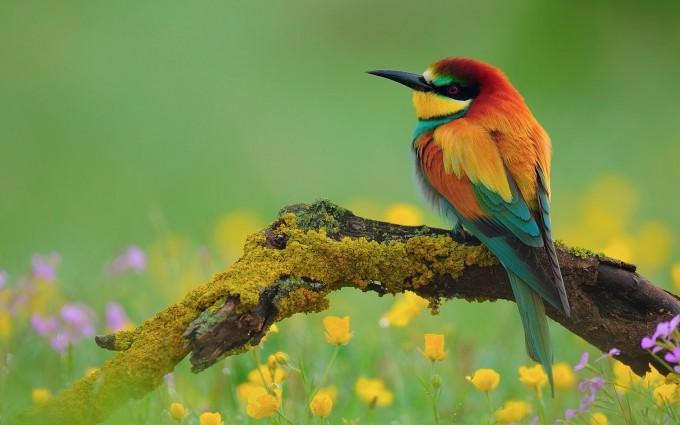 bird wallpaper colorful