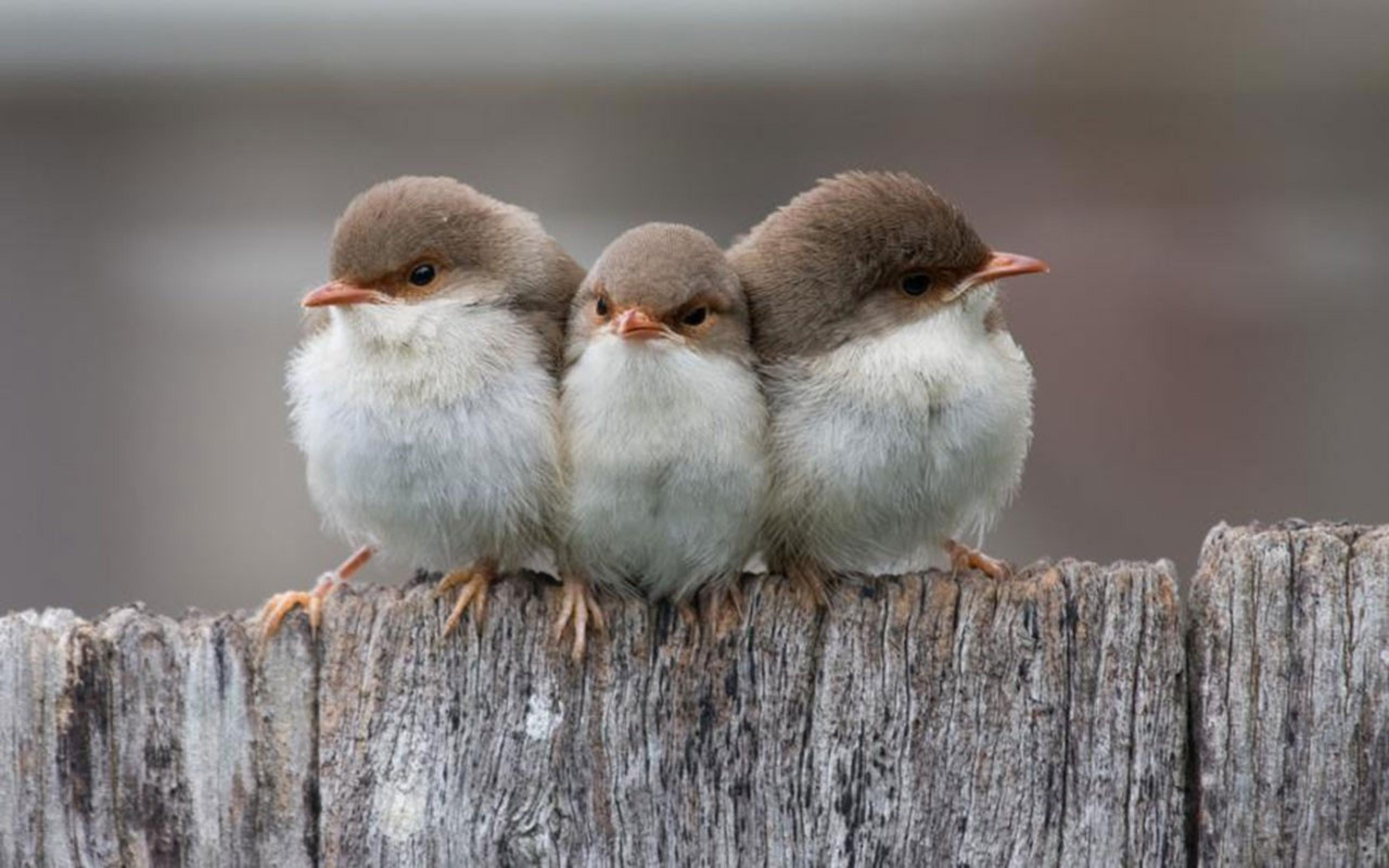 bird wallpaper cute little