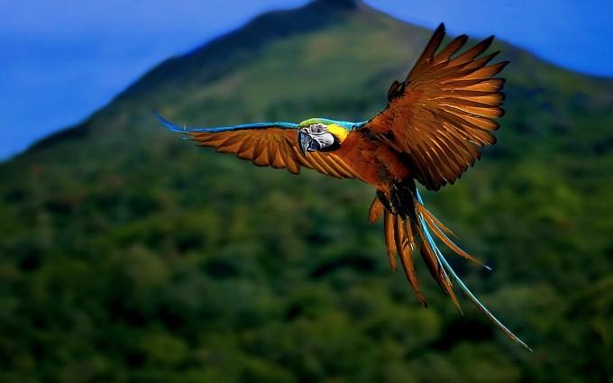 bird wallpaper flying