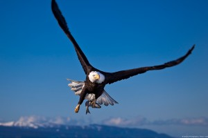 bird wallpaper flying cool