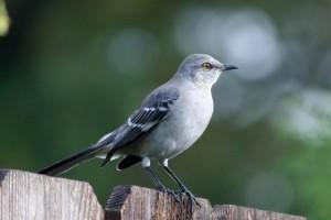 bird wallpaper grey