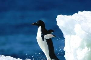 bird wallpaper ice berg