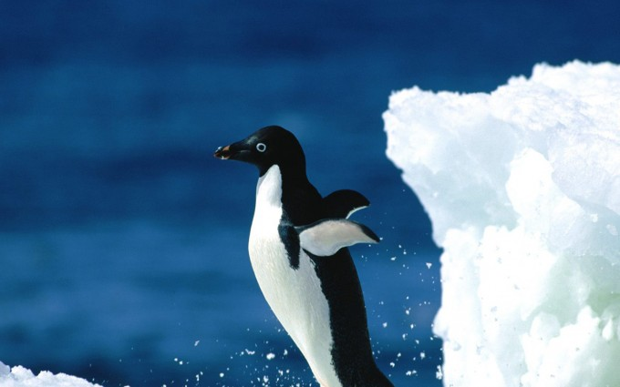 bird wallpaper ice berg