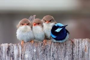 bird wallpaper little