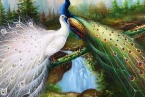 bird wallpaper love peacock