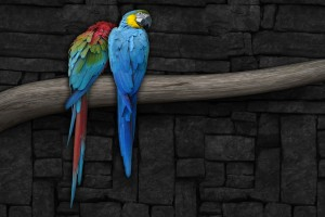 bird wallpaper parrots