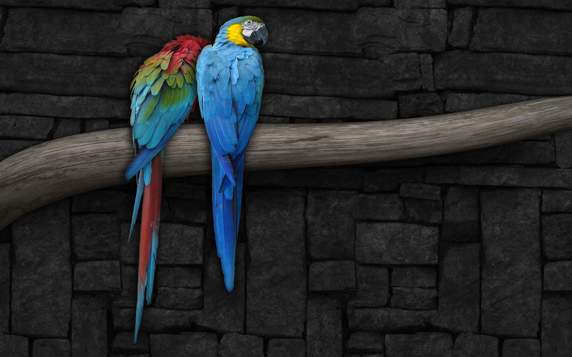 bird wallpaper parrots