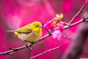 bird wallpaper pink
