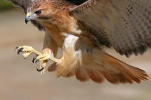 bird wallpaper prey