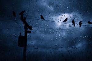 bird wallpaper rain