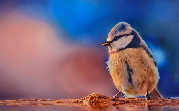 bird wallpaper tiny