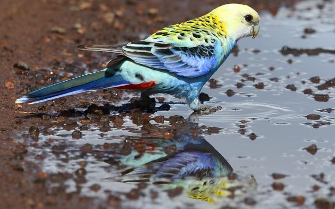 bird wallpaper water
