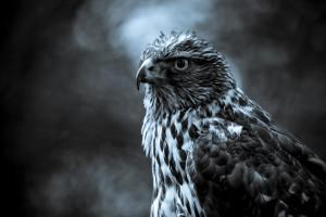 bird wallpaper winter