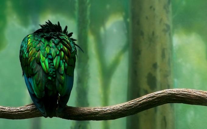birds images