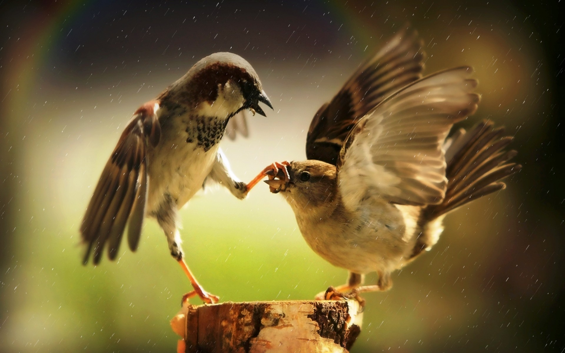 birds wallpapers domination