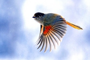 birds wallpapers stunning