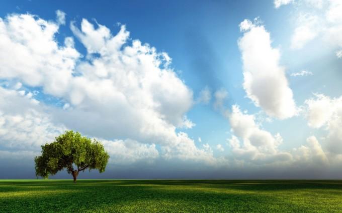 cloud wallpaper tree