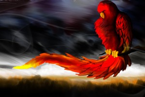 cool wallpapers 3d parrot