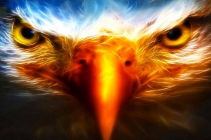 cool wallpapers eagle