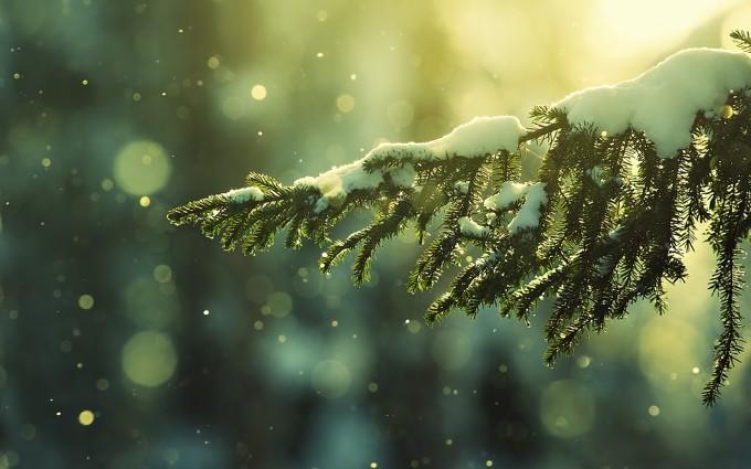 desktop backgrounds winter