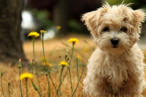 dog hd wallpaper